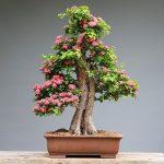 Cara mudah membuat bonsai